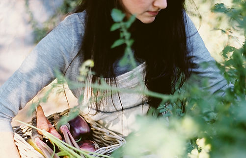 A woman harvests root vegetables for the CSA basket