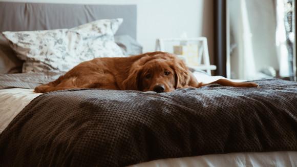 כלב עייף זה כלב טוב