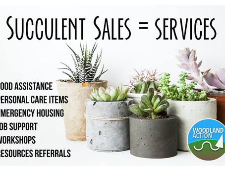 Succulent Sales