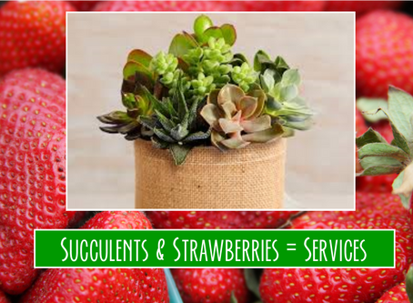 Succulents and Strawberries