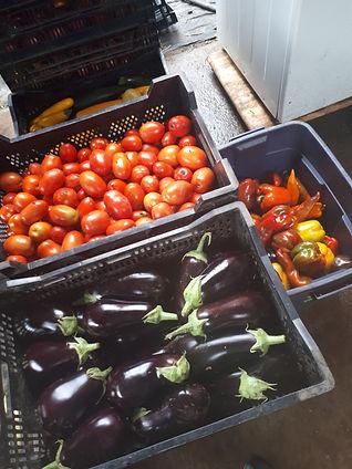 eggplants and tomatoes.jpg
