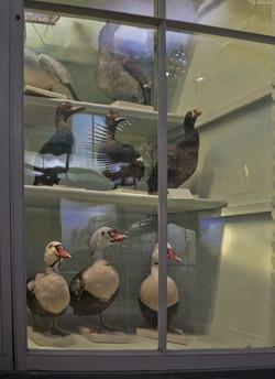 le placard à canards