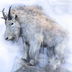 l'abominable chèvre des neiges