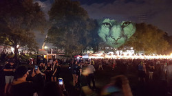 Electric Zoo Festival, NY - Animal Watching