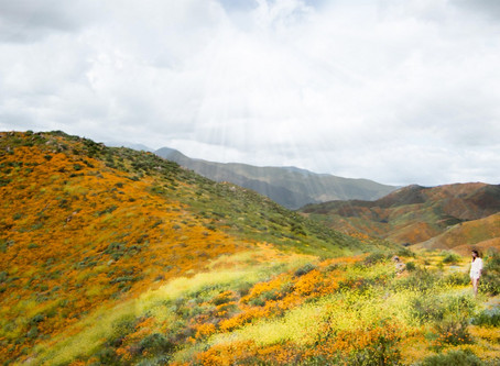 Hiking Lake Elisnore: California Super Bloom