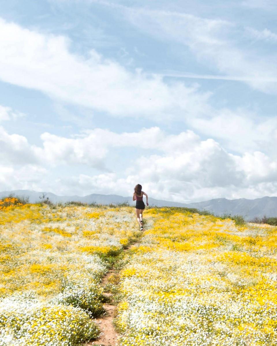 walker canyon,lake elsinore,california golden poppy, california wildflowers, socal