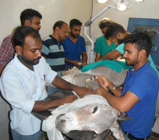 Donkey Operation