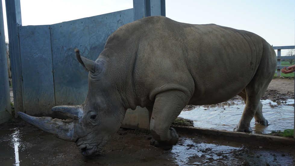 Kai the Rhino