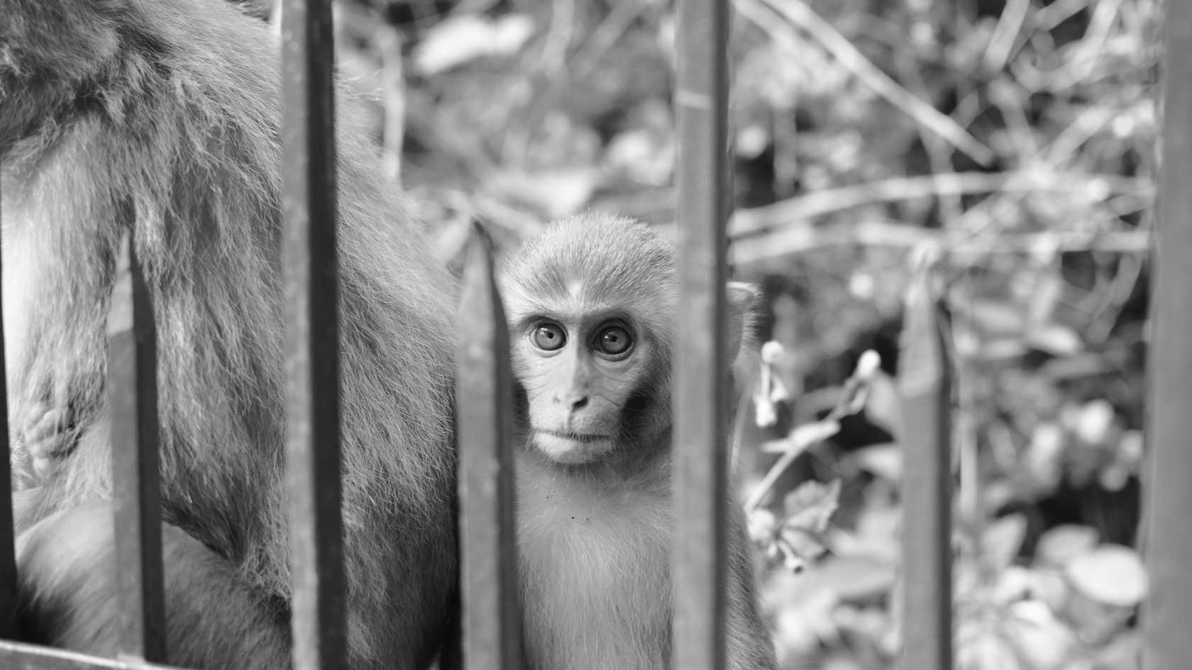 Who is in captivity?