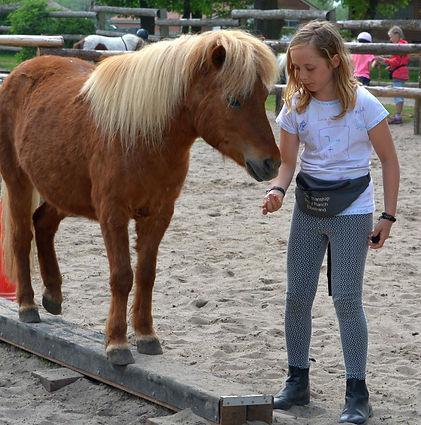 Pony-Foto%252520Ersatz_edited_edited_edi