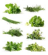 pbn 8 plant Herbs.jpg