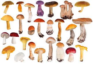 pbn 8 plants mushrooms.jpg