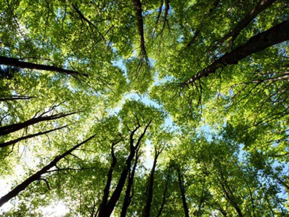 albero anelli di carbonio datazione