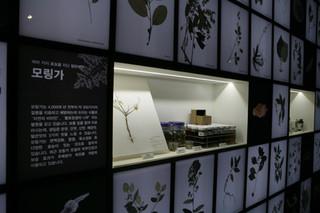 [국립생물자원관 National Institute of Biological Resources] 11차 기획전, '메콩강 유역의 살아있는 보물을 찾아서'