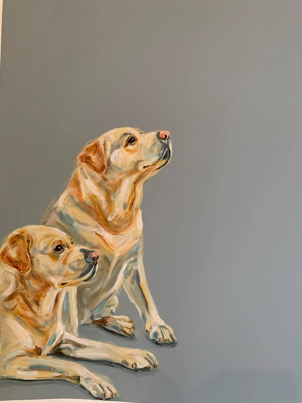 Photo shows two labrador type dogs. One is sitting, the other is half  lying down