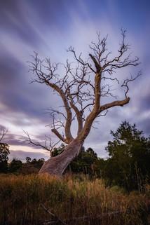 Blue Hour Tree