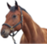 kisspng-horse-sound-effect-youtube-frees