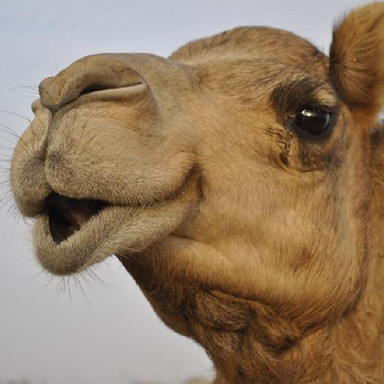 Are You a Camel or a Dog When It Comes to Learning?