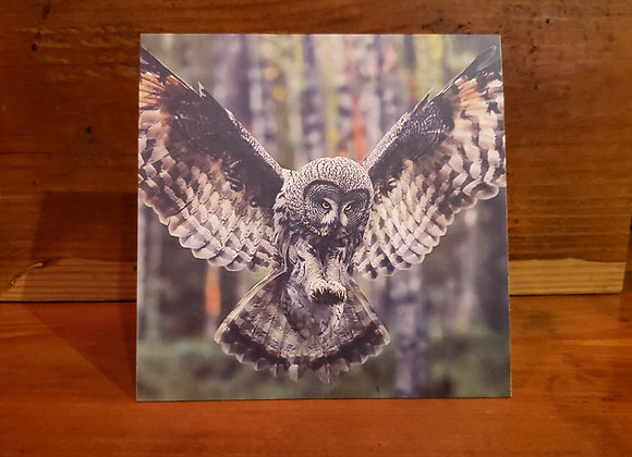 CABIN CARD FLYING OWL