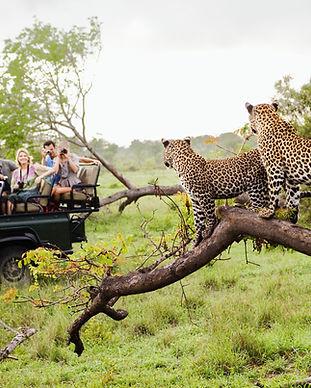 Chitas no Safari