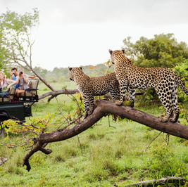 Choosing between Private and Group Safari