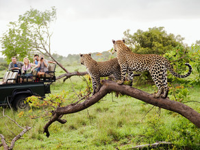A History of the Modern Day African Safari & its Role in Sustainable Development