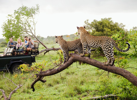 AFRICA REVEALED: THE HISTORY OF SAFARIS