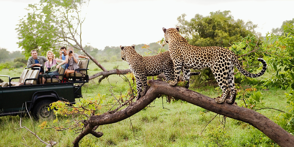 SOUTH AFRICAN WINE SAFARI