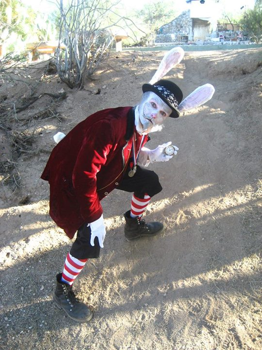 Stephen as The White Rabbit