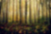 Bos-bladeren-bomen-tak-zon-natuur-landsc