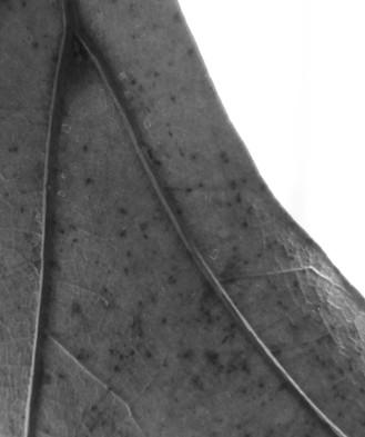 8 - Puente, D, 2.jpg