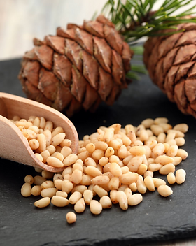 pine nut FW.png
