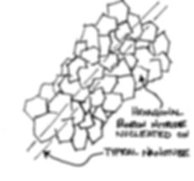 Boron Nitride Nanotube