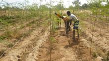 """Frühlingsfest am 29. April. """"Hilfe zur Selbsthilfe"""" durch landwirtschaftliche Projekte"""