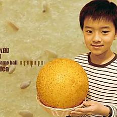 功夫芝麻球 Kungfu Sesame Ball