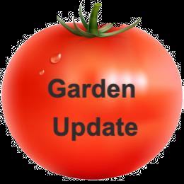 new garden photos