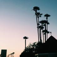 San Diego Palms