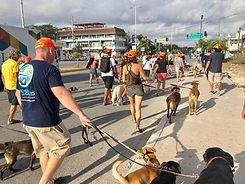 Dog Walk action pic.jpg