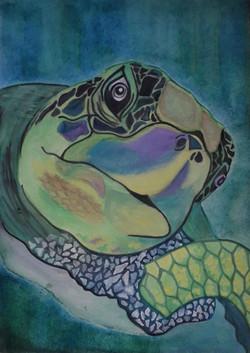 lluvia turtle