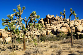 Park National de Joshua Tree