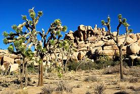 Park National de Joshua Tree