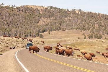 Lamar Valley Yellowstone.jpg