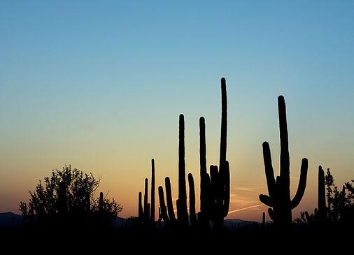 saguaro-cactus.jpg