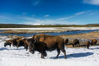 Park National de Yellowstone, vallée de Lamar
