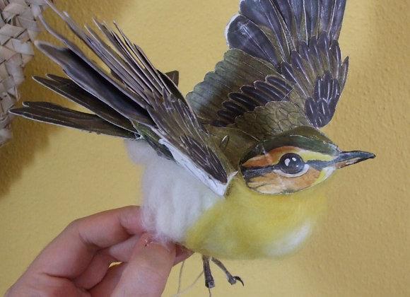 Colibri-sílfide