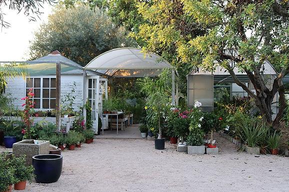Centro de Jardinagem O Lírio