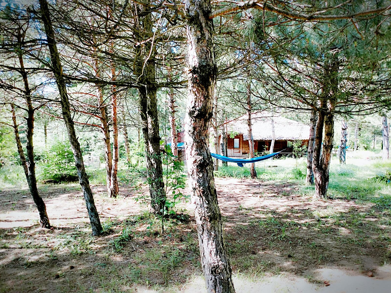 Oğuz Abadan Sanat Kampı