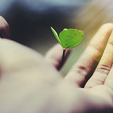 Wilderness_edited.jpg