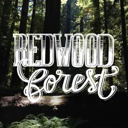 redwood_forest_2