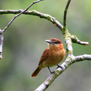 Plants that Attract Song Birds